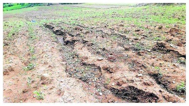 Agricultores de Pucará sufren por hectáreas de maíz, papa y otros dañados con granizada