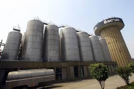 Empresa cervecera comprar� 45 000 toneladas de ma�z peruano para apoyar al sector agr�cola