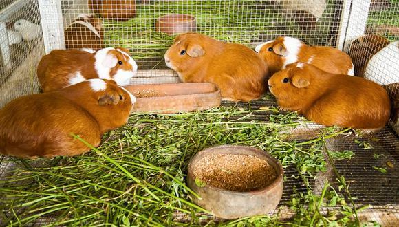 Agroideas invierte cuatro millones en Huancavelica