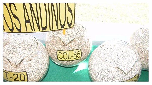 Grano andino aún es considerado el patito feo de la mesa pese a su alto nivel nutritivo