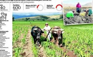 Productores de diez distritos agrícolas de la región Junín son afectados por covid-19