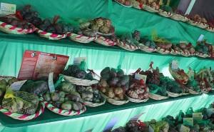 Aumenta producción de papa en Huancavelica sumando este año más de 63 mil TN