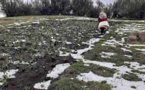 Lluvia y granizada azota cultivos en Ccarahuasa