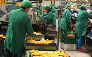 MTPE plantea que Ley de Promoción Agraria incluya garantía de recontratación para trabajadores