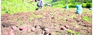 Agricultores proyectan sembrar más de 110 mil hectáreas en la región Junín