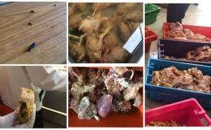 Así se almacenan carne de pollo y cerdos en locales de Huancayo
